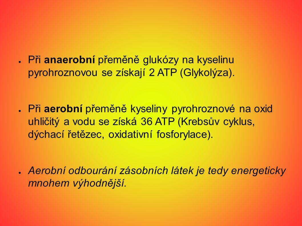Glykolýza: ● Glykolýza (z řeckého glykos = sladký a lysis = rozpad) je metabolická dráha přeměny glukózy na dvě molekuly pyruvátu za čistého výtěžku dvou molekul ATP a dvou molekul NADH.