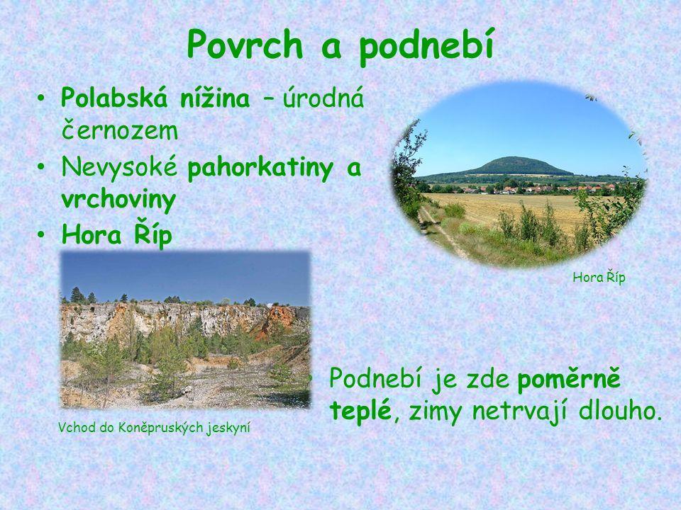 Povrch a podnebí Polabská nížina – úrodná černozem Nevysoké pahorkatiny a vrchoviny Hora Říp Podnebí je zde poměrně teplé, zimy netrvají dlouho.