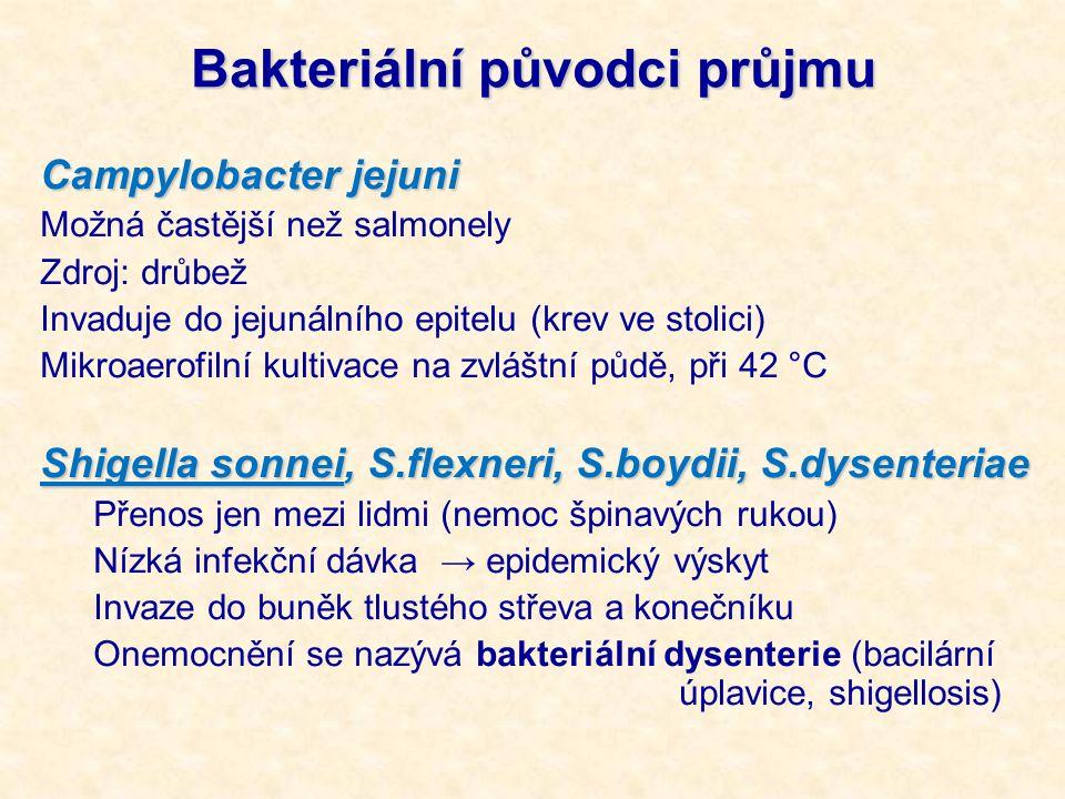 Bakteriální původci průjmu Campylobacter jejuni Možná častější než salmonely Zdroj: drůbež Invaduje do jejunálního epitelu (krev ve stolici) Mikroaerofilní kultivace na zvláštní půdě, při 42 °C Shigella sonnei, S.flexneri, S.boydii, S.dysenteriae Přenos jen mezi lidmi (nemoc špinavých rukou) Nízká infekční dávka → epidemický výskyt Invaze do buněk tlustého střeva a konečníku Onemocnění se nazývá bakteriální dysenterie (bacilární úplavice, shigellosis)