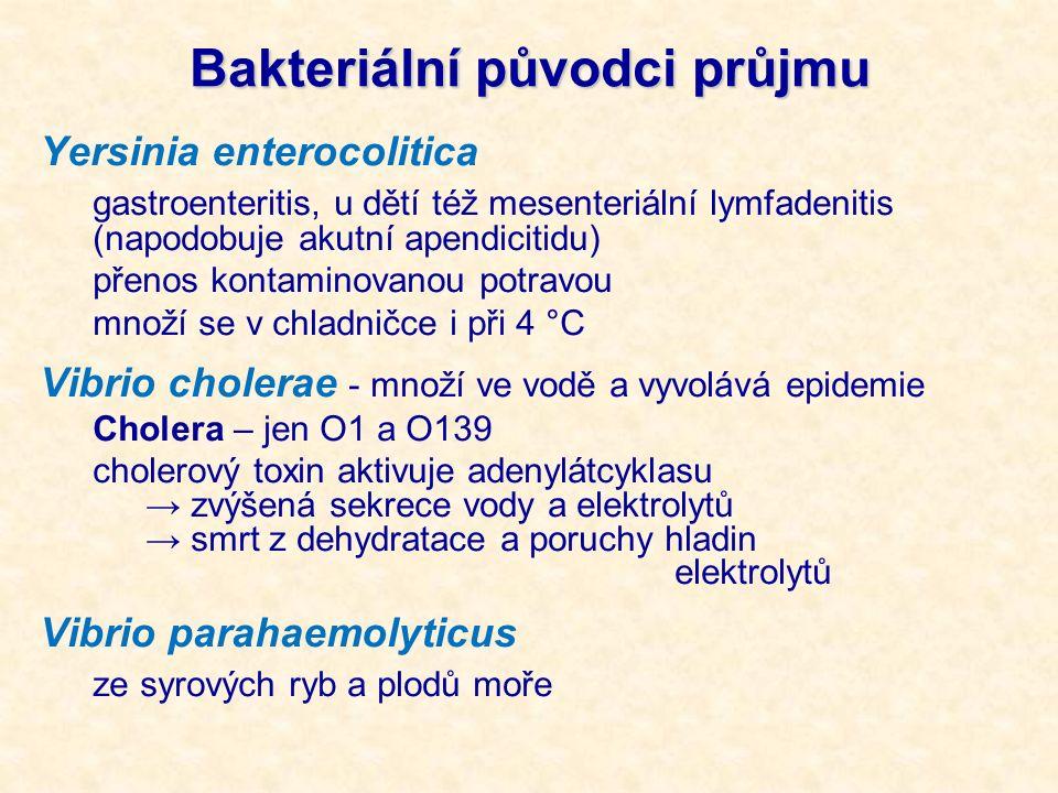Bakteriální původci průjmu Yersinia enterocolitica gastroenteritis, u dětí též mesenteriální lymfadenitis (napodobuje akutní apendicitidu) přenos kontaminovanou potravou množí se v chladničce i při 4 °C Vibrio cholerae - množí ve vodě a vyvolává epidemie Cholera – jen O1 a O139 cholerový toxin aktivuje adenylátcyklasu → zvýšená sekrece vody a elektrolytů → smrt z dehydratace a poruchy hladin elektrolytů Vibrio parahaemolyticus ze syrových ryb a plodů moře