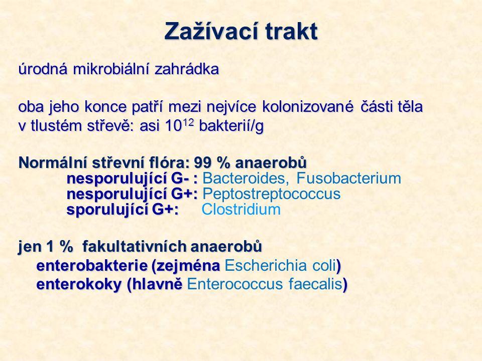 Zažívací trakt úrodná mikrobiální zahrádka oba jeho konce patří mezi nejvíce kolonizované části těla v tlustém střevě: asi 10 12 bakterií/g Normální střevní flóra: 99 % anaerobů nesporulující G- : nesporulující G+: sporulující G+: Normální střevní flóra: 99 % anaerobů nesporulující G- : Bacteroides, Fusobacterium nesporulující G+: Peptostreptococcus sporulující G+: Clostridium jen 1 % fakultativních anaerobů enterobakterie (zejména ) enterobakterie (zejména Escherichia coli) enterokoky (hlavně ) enterokoky (hlavně Enterococcus faecalis)