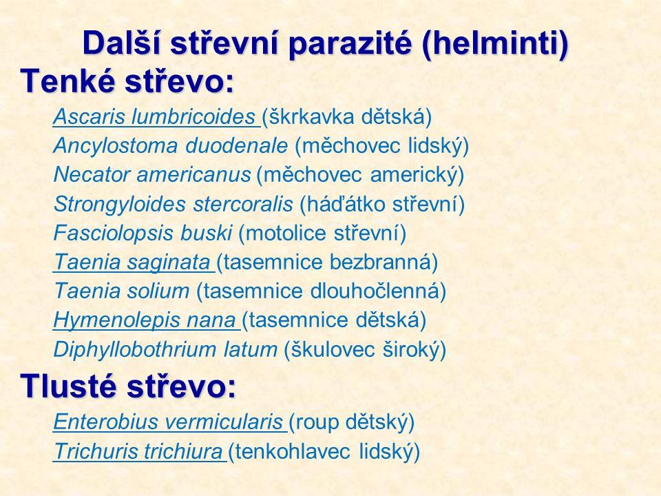 Další střevní parazité (helminti) Tenké střevo: Ascaris lumbricoides (škrkavka dětská) Ancylostoma duodenale (měchovec lidský) Necator americanus (měc