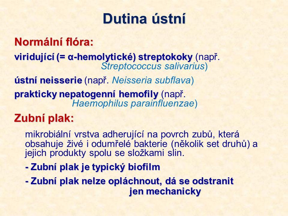 Dutina ústní Normální flóra: viridující (= α-hemolytické) streptokoky viridující (= α-hemolytické) streptokoky (např. Streptococcus salivarius) ústní