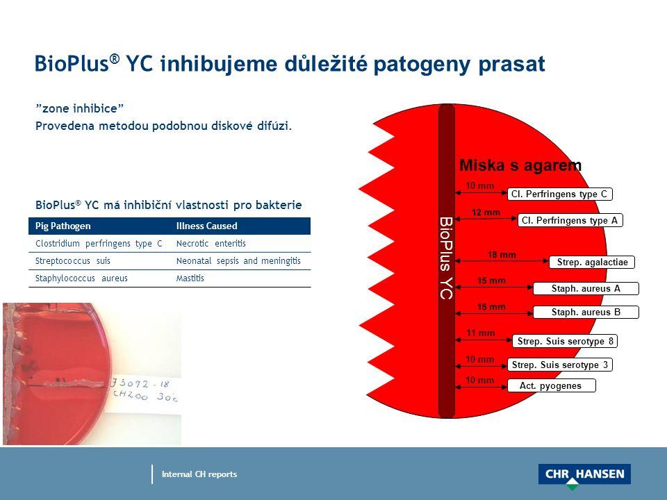 """BioPlus ® YC i nhibujeme důležité patogeny prasat """"zone inhibice"""" Provedena metodou podobnou diskové difúzi. 18 mm BioPlus YC Strep. agalactiae 12 mm"""