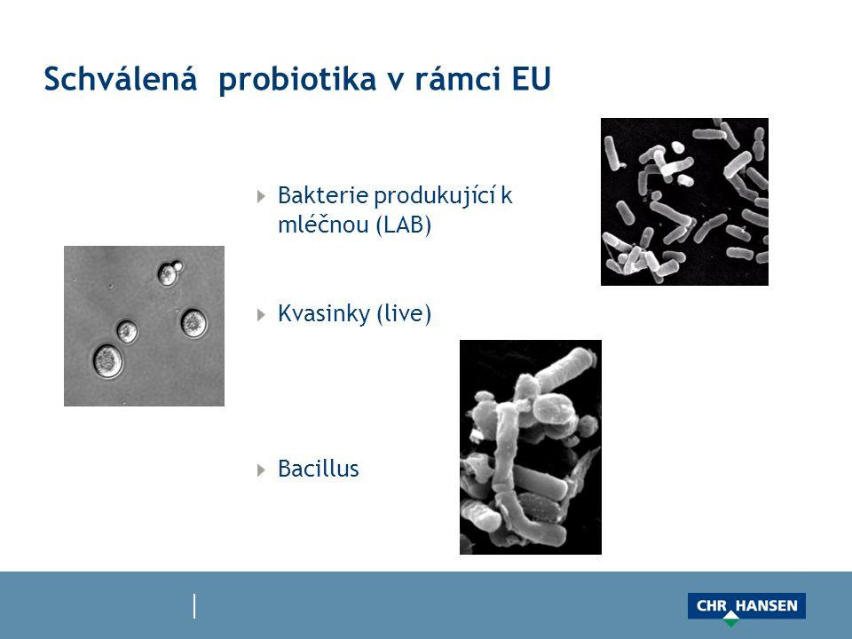 Schválená probiotika v rámci EU Bakterie produkující k mléčnou (LAB) Kvasinky (live) Bacillus
