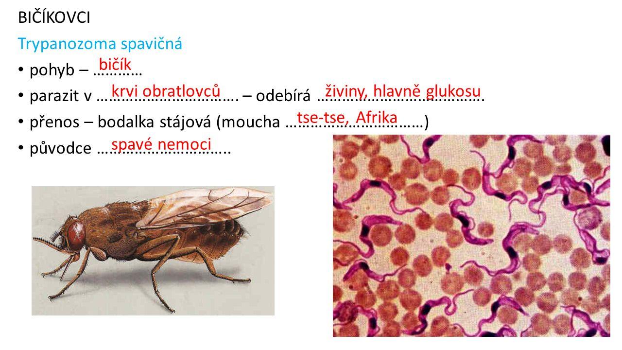 BIČÍKOVCI Trypanozoma spavičná pohyb – ………… parazit v ……………………………. – odebírá …………………………………. přenos – bodalka stájová (moucha ……………………………) původce …………