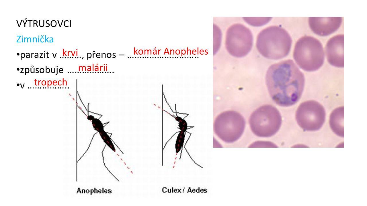 VÝTRUSOVCI Zimnička parazit v ………, přenos – ……………………….. způsobuje ………………. v …………….. krvi komár Anopheles malárii tropech