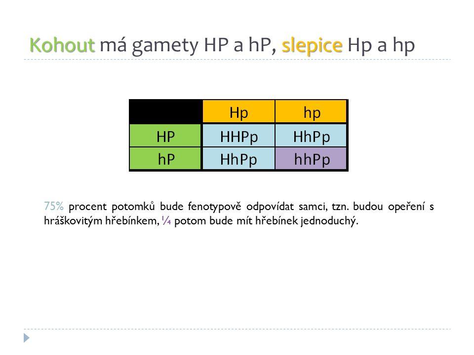 Kohoutslepice Kohout má gamety HP a hP, slepice Hp a hp 75% procent potomků bude fenotypově odpovídat samci, tzn. budou opeření s hráškovitým hřebínke