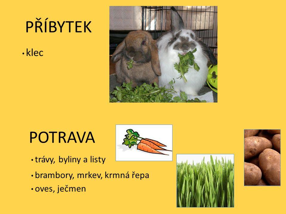 PŘÍBYTEK POTRAVA trávy, byliny a listy brambory, mrkev, krmná řepa oves, ječmen klec