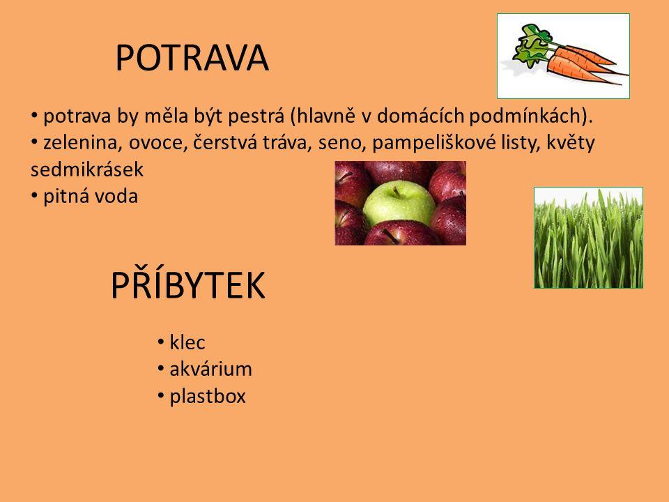 POTRAVA potrava by měla být pestrá (hlavně v domácích podmínkách). zelenina, ovoce, čerstvá tráva, seno, pampeliškové listy, květy sedmikrásek pitná v