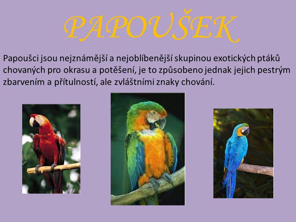 PAPOUŠEK Papoušci jsou nejznámější a nejoblíbenější skupinou exotických ptáků chovaných pro okrasu a potěšení, je to způsobeno jednak jejich pestrým zbarvením a přítulností, ale zvláštními znaky chování.