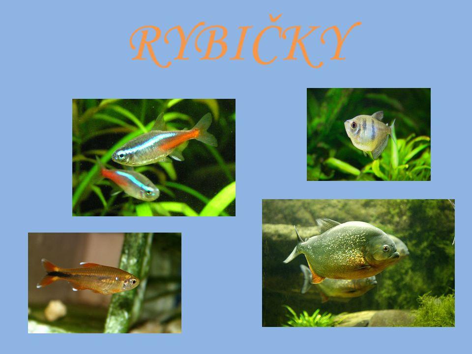 PŘÍBYTEK - akvárium Malá a střední akvária slouží obvykle pro domácí chov ryb, velká akvária jsou zřizována ze vzdělávacích důvodů například v zoologických zahradách nebo jako živá dekorace ve veřejných prostorách.