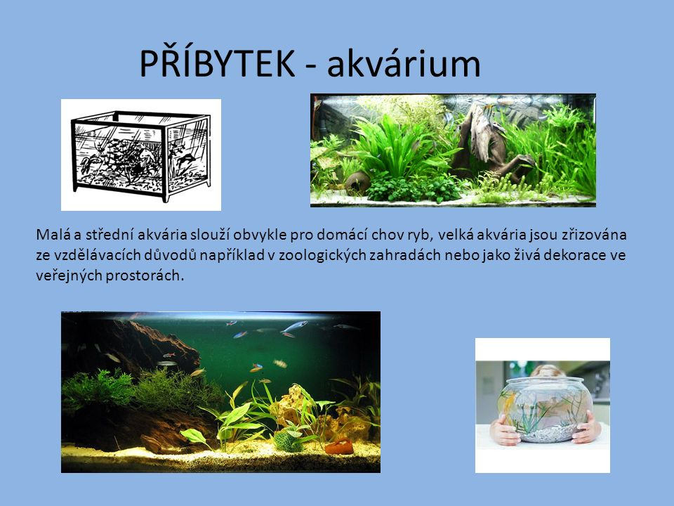 PŘÍBYTEK - akvárium Malá a střední akvária slouží obvykle pro domácí chov ryb, velká akvária jsou zřizována ze vzdělávacích důvodů například v zoologi