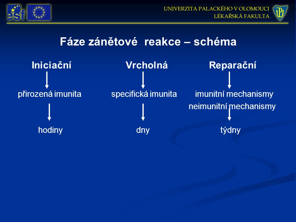 Fáze zánětové reakce – schéma Iniciační Vrcholná Reparační přirozená imunita specifická imunita imunitní mechanismy neimunitní mechanismy hodinydny tý