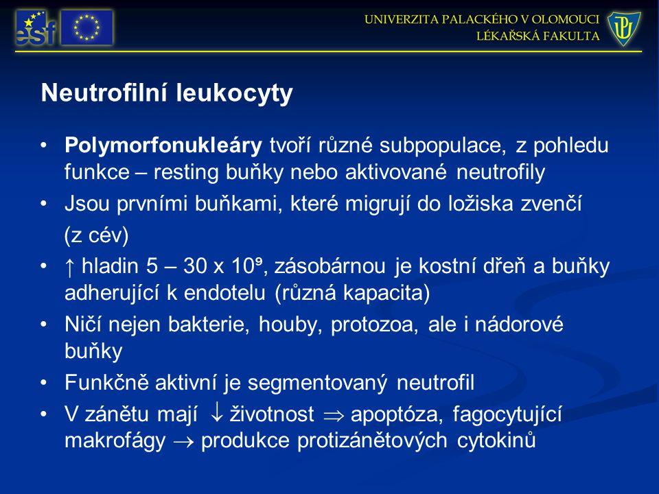 Neutrofilní leukocyty Polymorfonukleáry tvoří různé subpopulace, z pohledu funkce – resting buňky nebo aktivované neutrofily Jsou prvními buňkami, kte