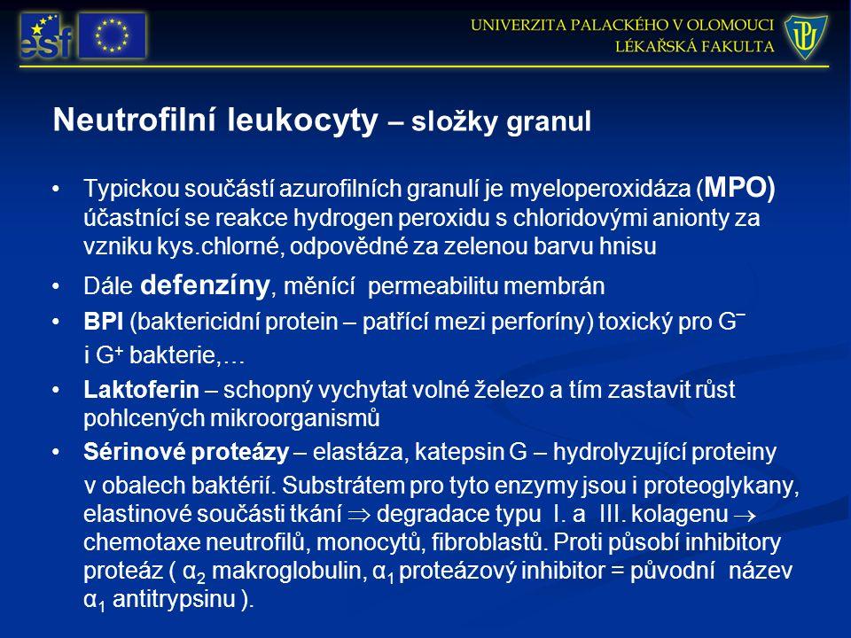 Neutrofilní leukocyty – složky granul Typickou součástí azurofilních granulí je myeloperoxidáza ( MPO) účastnící se reakce hydrogen peroxidu s chlorid