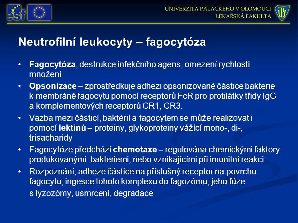 Neutrofilní leukocyty – fagocytóza Fagocytóza, destrukce infekčního agens, omezení rychlosti množení Opsonizace – zprostředkuje adhezi opsonizované částice bakterie k membráně fagocytu pomocí receptorů FcR pro protilátky třidy IgG a komplementových receptorů CR1, CR3.