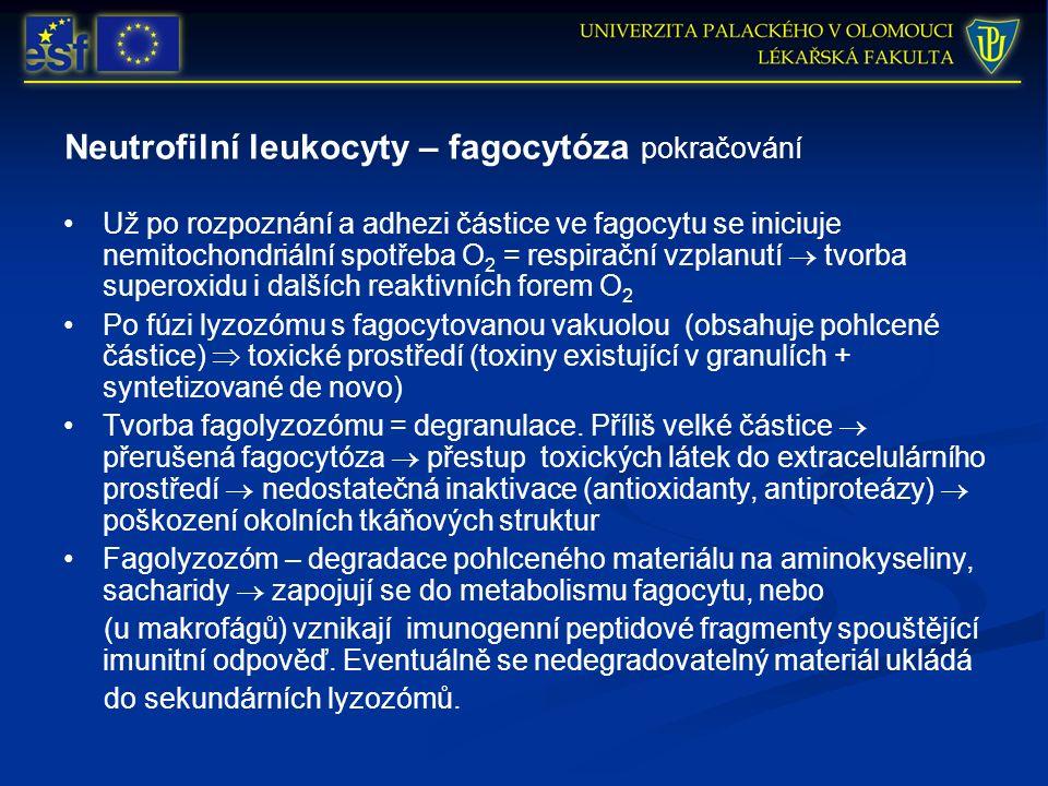 Neutrofilní leukocyty – fagocytóza pokračování Už po rozpoznání a adhezi částice ve fagocytu se iniciuje nemitochondriální spotřeba O 2 = respirační vzplanutí  tvorba superoxidu i dalších reaktivních forem O 2 Po fúzi lyzozómu s fagocytovanou vakuolou (obsahuje pohlcené částice)  toxické prostředí (toxiny existující v granulích + syntetizované de novo) Tvorba fagolyzozómu = degranulace.