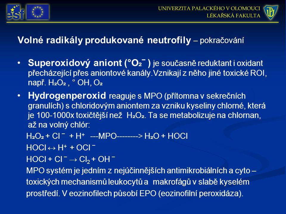 Volné radikály produkované neutrofily – pokračování Superoxidový aniont (°O ₂ ‾ ) je současně reduktant i oxidant přecházející přes aniontové kanály.Vznikají z něho jiné toxické ROI, např.