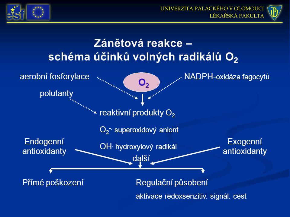 Zánětová reakce – schéma účinků volných radikálů O 2 aerobní fosforylace reaktivní produkty O 2 polutanty NADPH- oxidáza fagocytů Endogenní antioxidanty O 2 -.