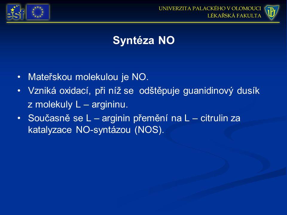 Syntéza NO Mateřskou molekulou je NO.