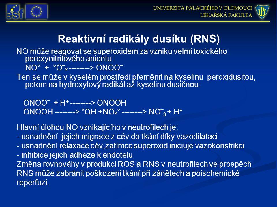 Reaktivní radikály dusíku (RNS) NO může reagovat se superoxidem za vzniku velmi toxického peroxynitritového aniontu : NO° + °O‾ ₂ --------> ONOO‾ Ten se může v kyselém prostředí přeměnit na kyselinu peroxidusitou, potom na hydroxylový radikál až kyselinu dusičnou: ONOO‾ + H + --------> ONOOH ONOOH --------> °OH +NO ₂ ° --------> NO‾ 3 + H + Hlavní úlohou NO vznikajícího v neutrofilech je: - usnadnění jejich migrace z cév do tkání díky vazodilataci - usnadnění relaxace cév,zatímco superoxid iniciuje vazokonstrikci - inhibice jejich adheze k endotelu Změna rovnováhy v produkci ROS a RNS v neutrofilech ve prospěch RNS může zabránit poškození tkání při zánětech a poischemické reperfuzi.
