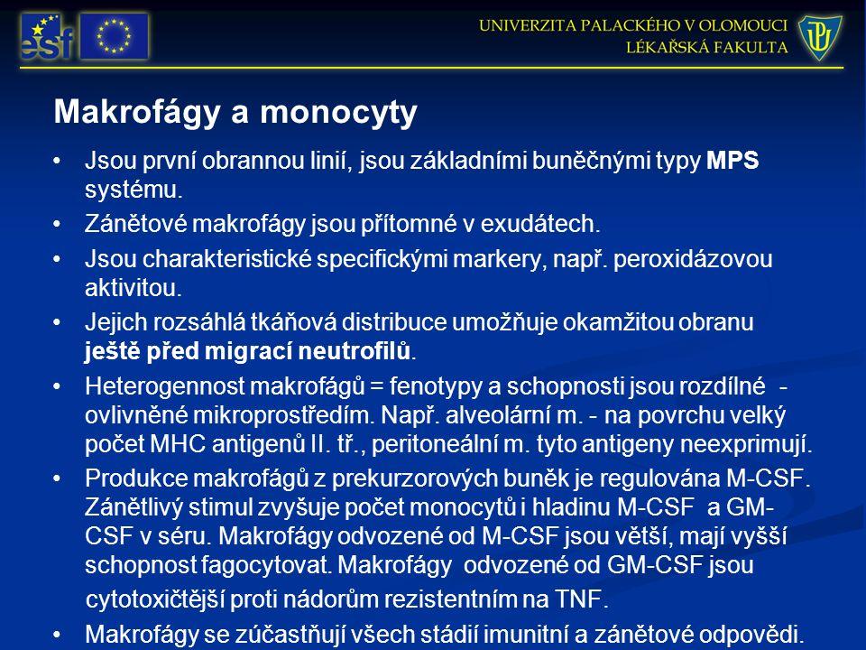 Makrofágy a monocyty Jsou první obrannou linií, jsou základními buněčnými typy MPS systému. Zánětové makrofágy jsou přítomné v exudátech. Jsou charakt