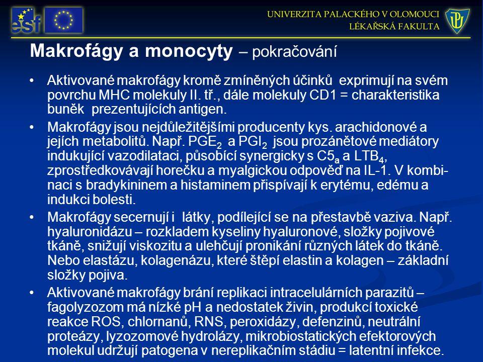 Makrofágy a monocyty – pokračování Aktivované makrofágy kromě zmíněných účinků exprimují na svém povrchu MHC molekuly II. tř., dále molekuly CD1 = cha