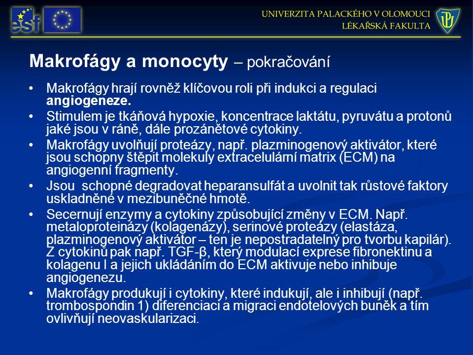 Makrofágy a monocyty – pokračování Makrofágy hrají rovněž klíčovou roli při indukci a regulaci angiogeneze. Stimulem je tkáňová hypoxie, koncentrace l