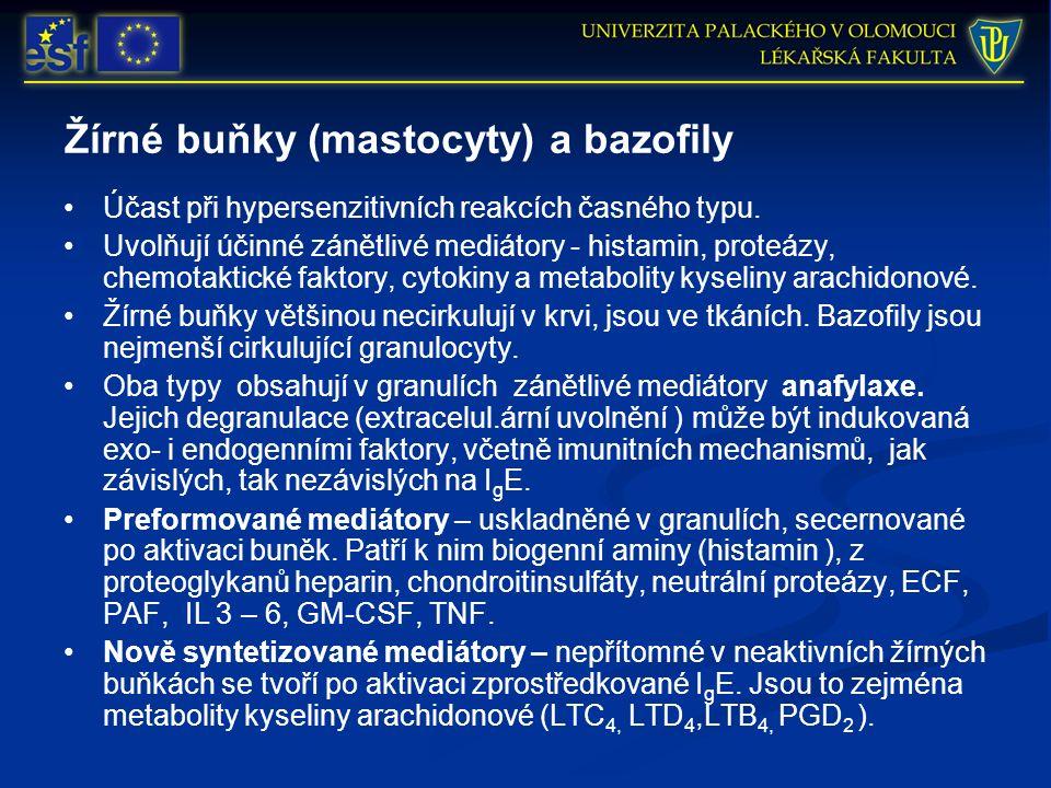 Žírné buňky (mastocyty) a bazofily Účast při hypersenzitivních reakcích časného typu. Uvolňují účinné zánětlivé mediátory - histamin, proteázy, chemot