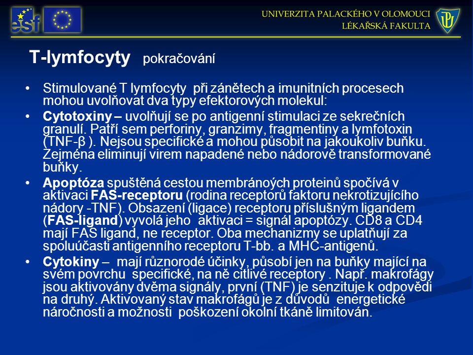 T-lymfocyty pokračování Stimulované T lymfocyty při zánětech a imunitních procesech mohou uvolňovat dva typy efektorových molekul: Cytotoxiny – uvolňují se po antigenní stimulaci ze sekrečních granulí.