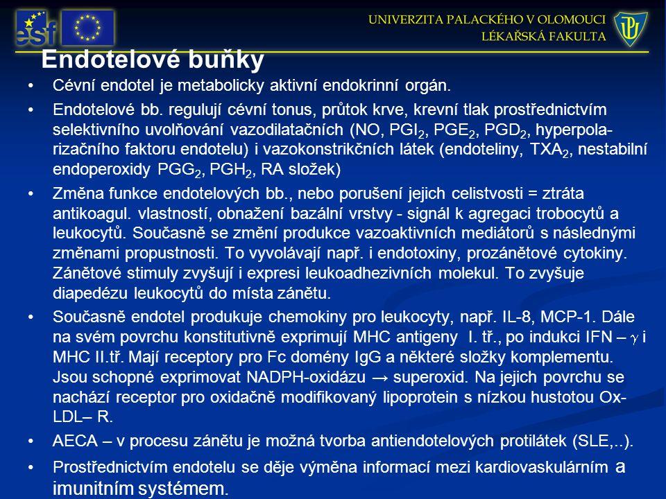 Endotelové buňky Cévní endotel je metabolicky aktivní endokrinní orgán. Endotelové bb. regulují cévní tonus, průtok krve, krevní tlak prostřednictvím