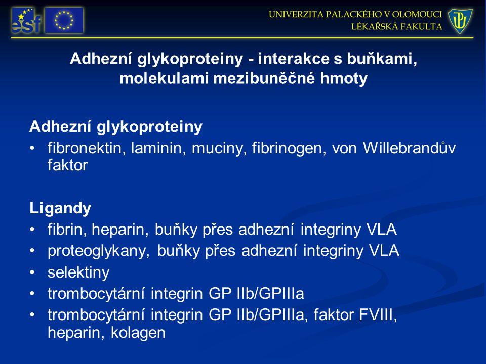 Adhezní glykoproteiny - interakce s buňkami, molekulami mezibuněčné hmoty Adhezní glykoproteiny fibronektin, laminin, muciny, fibrinogen, von Willebrandův faktor Ligandy fibrin, heparin, buňky přes adhezní integriny VLA proteoglykany, buňky přes adhezní integriny VLA selektiny trombocytární integrin GP IIb/GPIIIa trombocytární integrin GP IIb/GPIIIa, faktor FVIII, heparin, kolagen