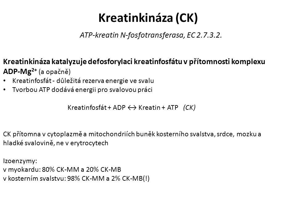 Kreatinkináza (CK) ATP-kreatin N-fosfotransferasa, EC 2.7.3.2.