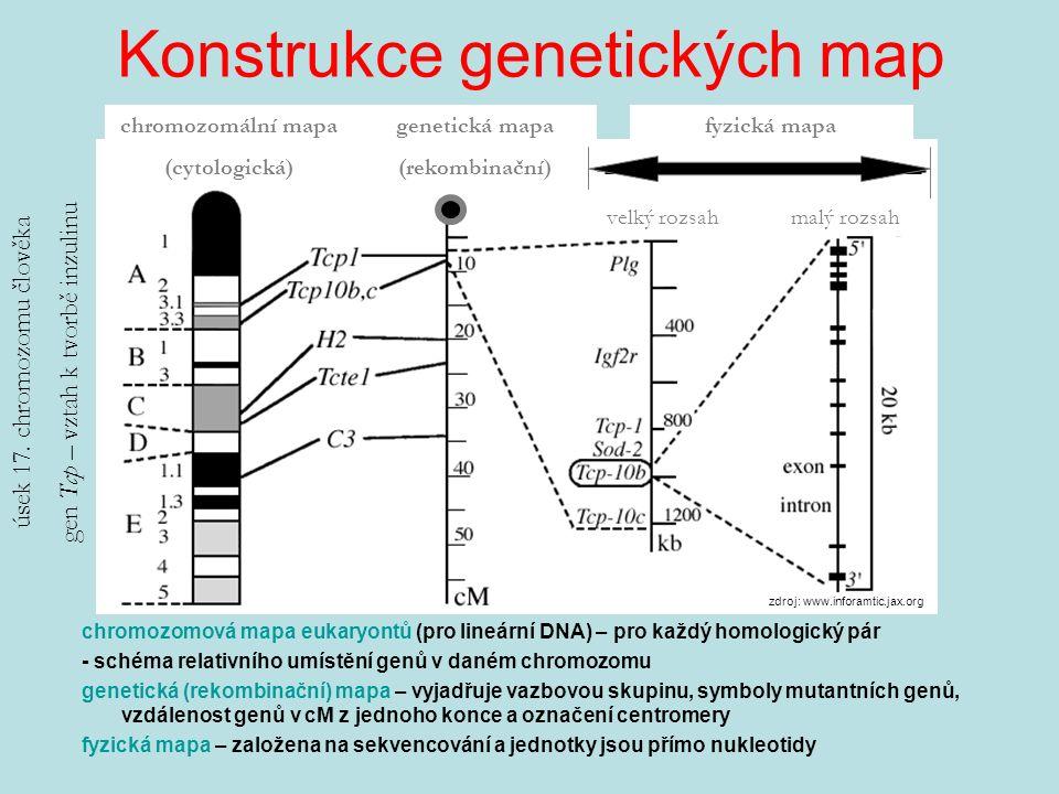 Konstrukce genetických map chromozomová mapa eukaryontů (pro lineární DNA) – pro každý homologický pár - schéma relativního umístění genů v daném chromozomu genetická (rekombinační) mapa – vyjadřuje vazbovou skupinu, symboly mutantních genů, vzdálenost genů v cM z jednoho konce a označení centromery fyzická mapa – založena na sekvencování a jednotky jsou přímo nukleotidy chromozomální mapa (cytologická) fyzická mapa genetická mapa (rekombinační) úsek 17.