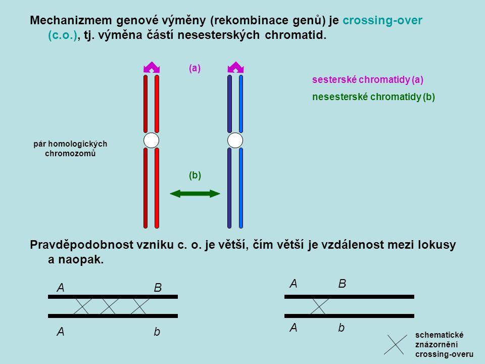 Mechanizmem genové výměny (rekombinace genů) je crossing-over (c.o.), tj.