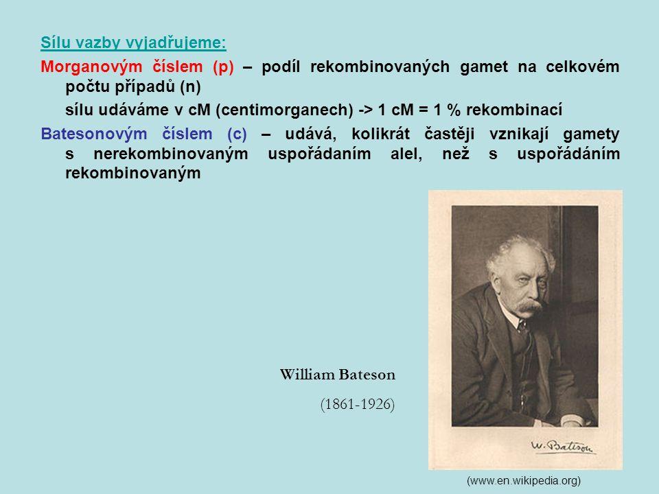 Sílu vazby vyjadřujeme: Morganovým číslem (p) – podíl rekombinovaných gamet na celkovém počtu případů (n) sílu udáváme v cM (centimorganech) -> 1 cM = 1 % rekombinací Batesonovým číslem (c) – udává, kolikrát častěji vznikají gamety s nerekombinovaným uspořádaním alel, než s uspořádáním rekombinovaným William Bateson (1861-1926) (www.en.wikipedia.org)