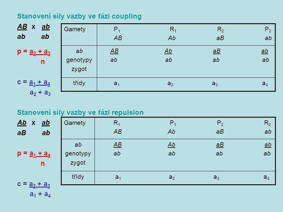 Stanovení síly vazby ve fázi coupling AB x ab ab p = a 2 + a 3 n c = a 1 + a 4 a 2 + a 3 Stanovení síly vazby ve fázi repulsion Ab x ab aB ab p = a 1 + a 4 n c = a 2 + a 3 a 1 + a 4 Gamety P 1 R 1 R 2 P 2 AB Ab aB ab ab genotypy zygot AB Ab aB ab ab ab ab ab třídy a 1 a 2 a 3 a 4 Gamety R 1 P 1 P 2 R 2 AB Ab aB ab ab genotypy zygot AB Ab aB ab ab ab ab ab třídy a 1 a 2 a 3 a 4