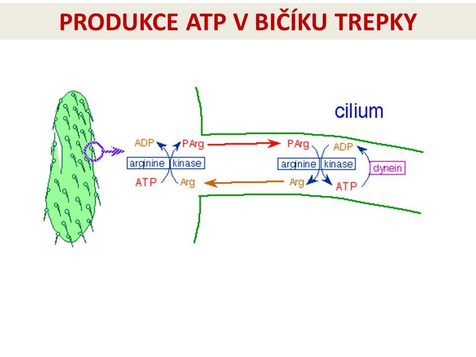 PRODUKCE ATP V BIČÍKU TREPKY