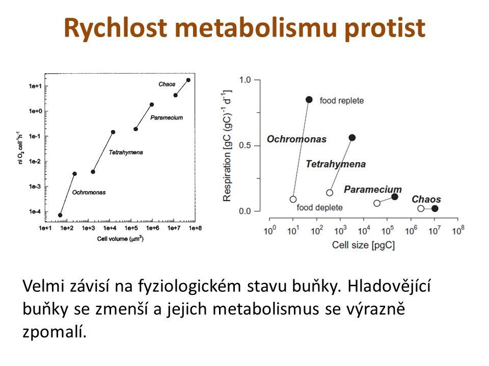 Rychlost metabolismu protist Velmi závisí na fyziologickém stavu buňky. Hladovějící buňky se zmenší a jejich metabolismus se výrazně zpomalí.