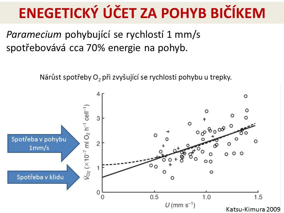 ENEGETICKÝ ÚČET ZA POHYB BIČÍKEM Katsu-Kimura 2009 Nárůst spotřeby O 2 při zvyšující se rychlosti pohybu u trepky. Paramecium pohybující se rychlostí