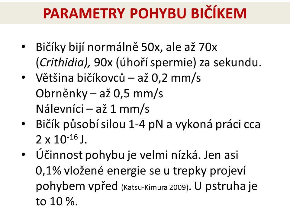 Bičíky bijí normálně 50x, ale až 70x (Crithidia), 90x (úhoří spermie) za sekundu. Většina bičíkovců – až 0,2 mm/s Obrněnky – až 0,5 mm/s Nálevníci – a