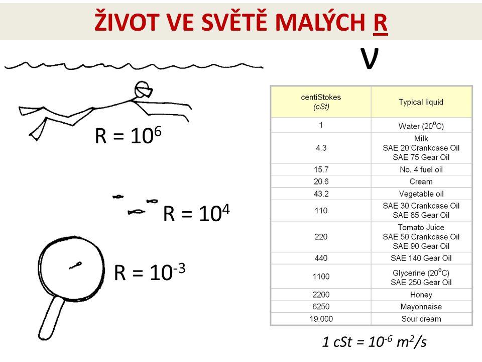 R = 10 4 R = 10 6 R = 10 -3 1 cSt = 10 -6 m 2 /s ν ŽIVOT VE SVĚTĚ MALÝCH R