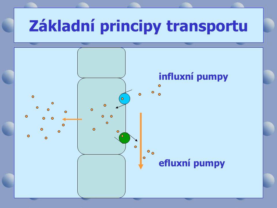 Základní principy transportu influxní pumpy efluxní pumpy