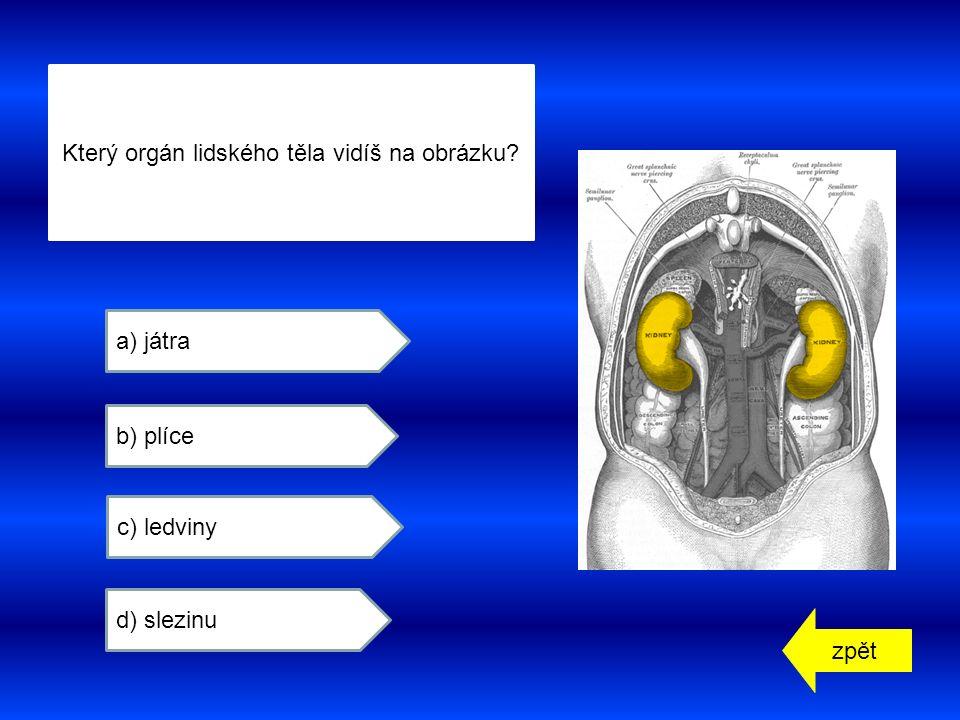 zpět a) játra b) plíce c) ledviny d) slezinu Který orgán lidského těla vidíš na obrázku
