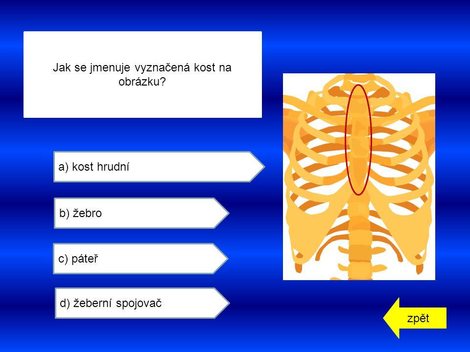 zpět a) kost hrudní b) žebro c) páteř d) žeberní spojovač Jak se jmenuje vyznačená kost na obrázku