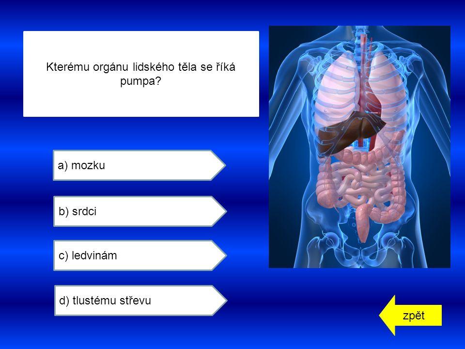 zpět a) mozku b) srdci c) ledvinám d) tlustému střevu Kterému orgánu lidského těla se říká pumpa