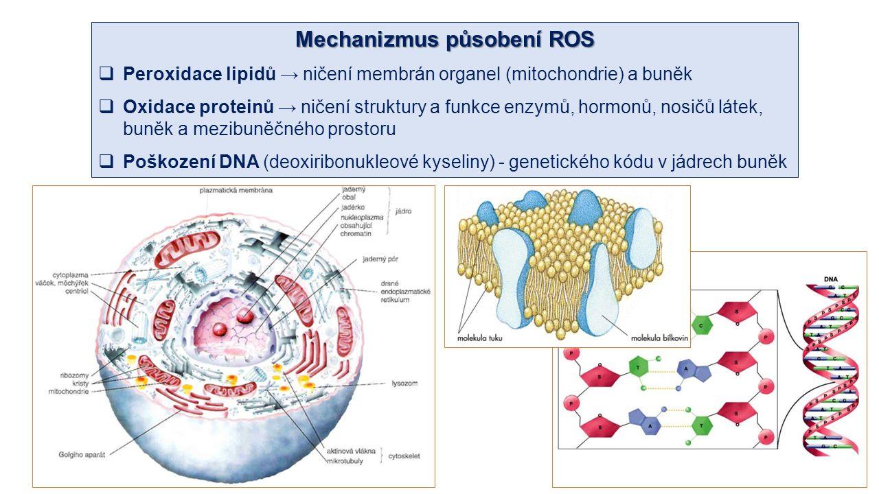 Mechanizmus působení ROS  Peroxidace lipidů → ničení membrán organel (mitochondrie) a buněk  Oxidace proteinů → ničení struktury a funkce enzymů, hormonů, nosičů látek, buněk a mezibuněčného prostoru  Poškození DNA (deoxiribonukleové kyseliny) - genetického kódu v jádrech buněk