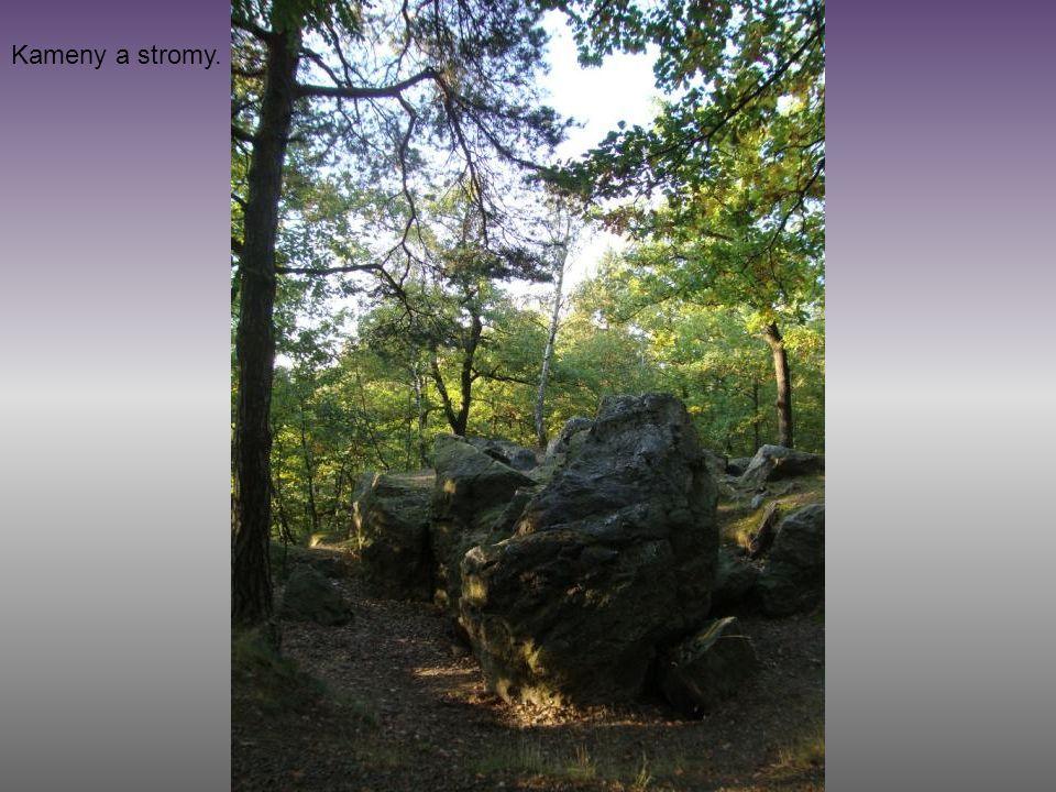Kameny a stromy.
