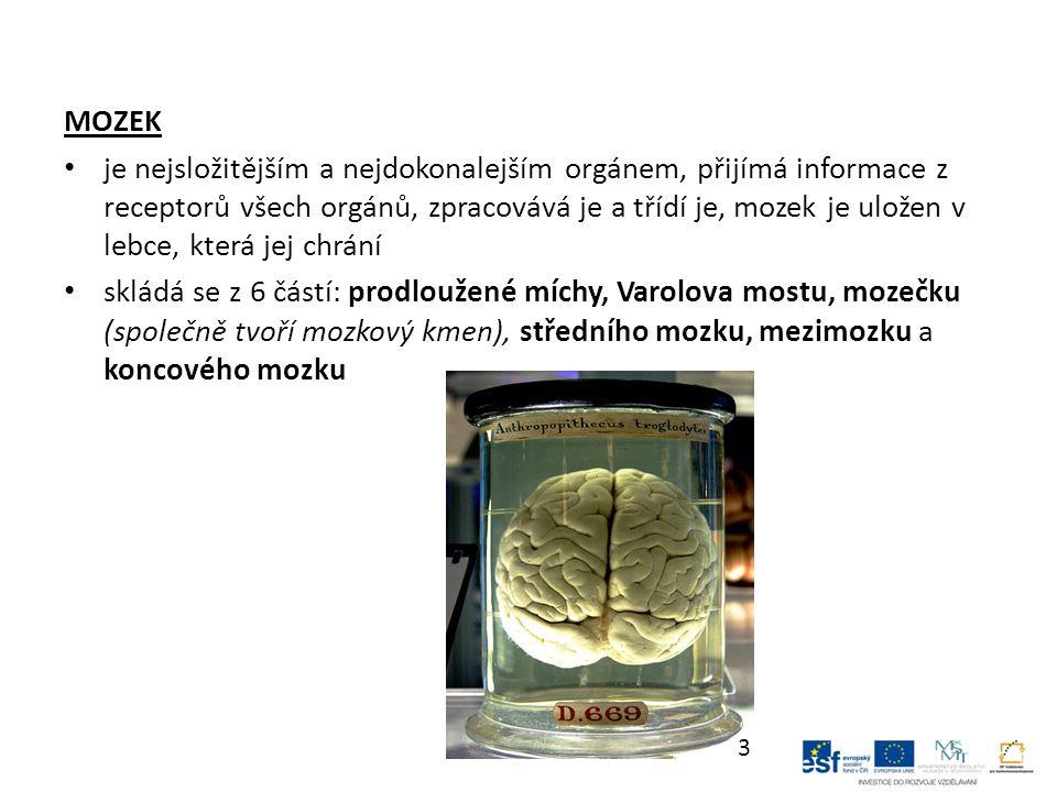 MOZEK je nejsložitějším a nejdokonalejším orgánem, přijímá informace z receptorů všech orgánů, zpracovává je a třídí je, mozek je uložen v lebce, která jej chrání skládá se z 6 částí: prodloužené míchy, Varolova mostu, mozečku (společně tvoří mozkový kmen), středního mozku, mezimozku a koncového mozku 3